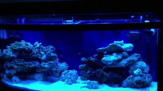 30 Days Old 72 Gallon Reef Tank, Just Finished  The Nitrogen Cycle