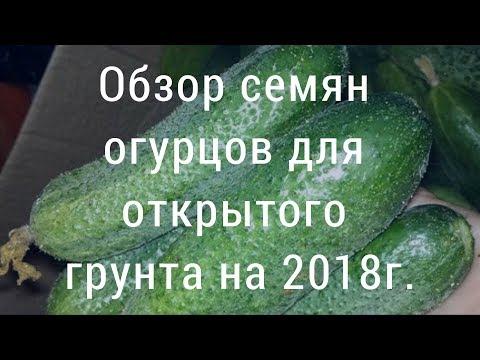 Обзор семян огурцов   для открытого грунта на 2018г.