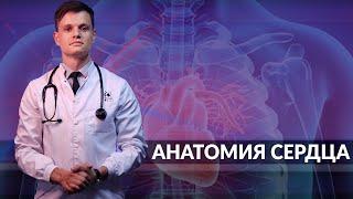 Умный медик [УМ] - Сердце. Кровообращение.