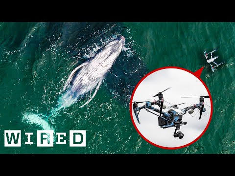 How Drones Catch Whale Snot for Biology Research | WIRED