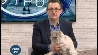 Советы ветеринара: кошка просит кота после стерилизации