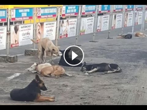 Kochouseph Chittillappilly films dangerous stray dogs in Kerala