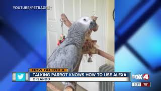 Talking Parrot Knows How To Use Alexa