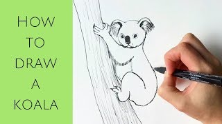 Beginners - How to draw a koala