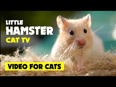VIDEO FOR CATS To Watch ★ LITTLE HAMSTER On Screen Cat TV