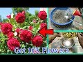 How to get Maximum Flowers in Plants | 10X Flowers