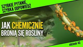Jak chemicznie bronią się rośliny? | Szybkie pytanie... #40