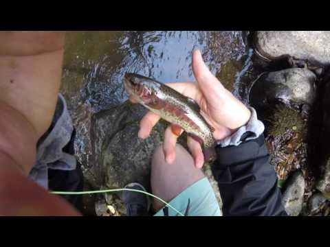 Fly Fishing for Tico Trout