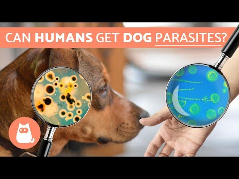 Can Humans Get PARASITES From DOGS? - Zoonotic Diseases