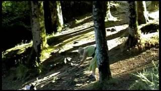 Huelgoat Bretagna la foresta di Re Artù