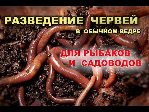 Разведение червей для рыбака и садовода в обычном ведре.