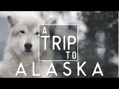 ALASKA IN 4K - Tim and Fin