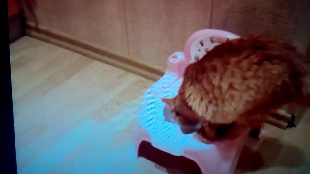Лоток или туалет для кошки – важная деталь в жизни четвероногого питомца. Если животное находится в городской квартире, оно должно быть с детства приучено к лотку.