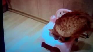 Маня ( моя кошка ) пытается сходить в туалет но ей что-то мешает....