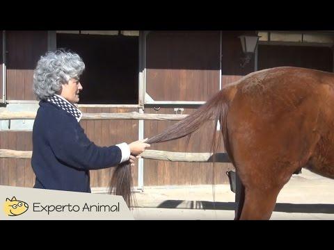 masajear-la-cola-del-caballo