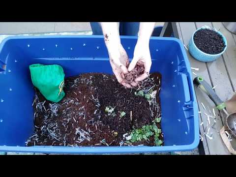 Vermicomposting 101: How to Create & Maintain a Simple Worm Bin