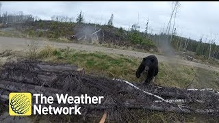 Video Bear charges hunter in Canada backcountry (1080P) download MP3, 3GP, MP4, WEBM, AVI, FLV November 2017