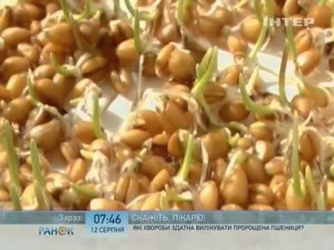 Какие болезни способна вылечить пророщенная пшеница - Ранок - Інтер