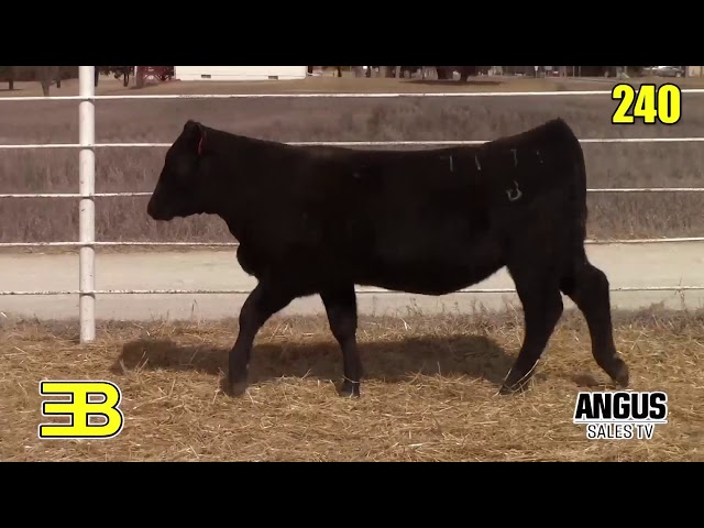 Benoit Angus Lots 239 - 241