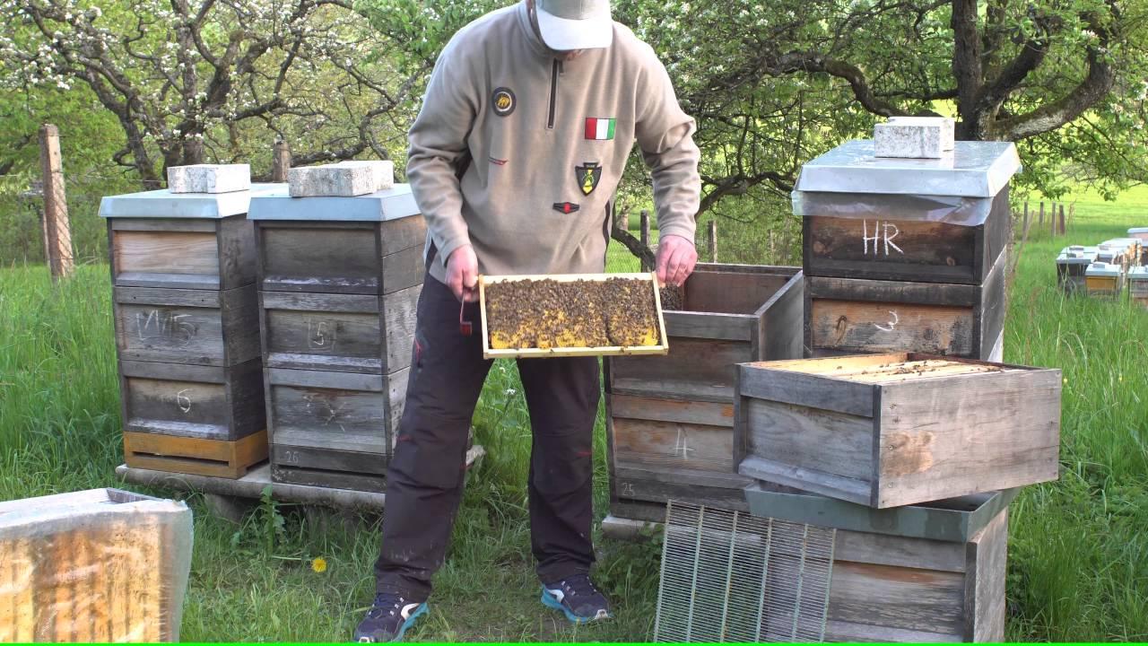 """""""Meine Bienen Sind Die Besten!"""""""