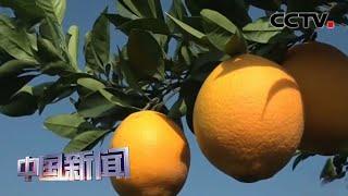 [中国新闻] 中国累计14个省区市贫困县实现全部脱贫摘帽 | CCTV中文国际