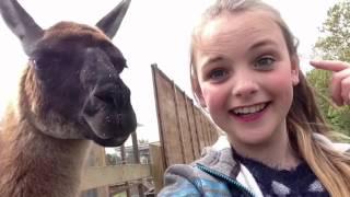 """""""llama song part 2""""~llama farm"""