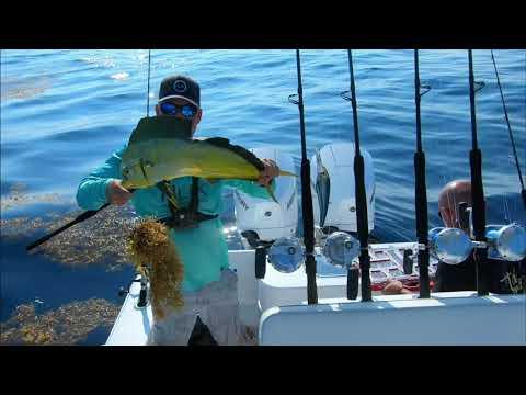 MAHI  MAHI !! Fishing Offshore Canyons In Search Of Tuna, White Marlin And Found, Bucket