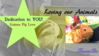 Dedication to YOU! -Guinea Pig love and any Animal- Thumbnail