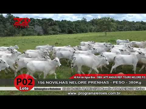 LOTE P02