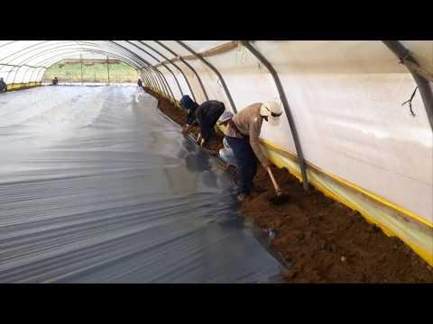 How To  Solarization Soil In Israel, Sterilization Soil