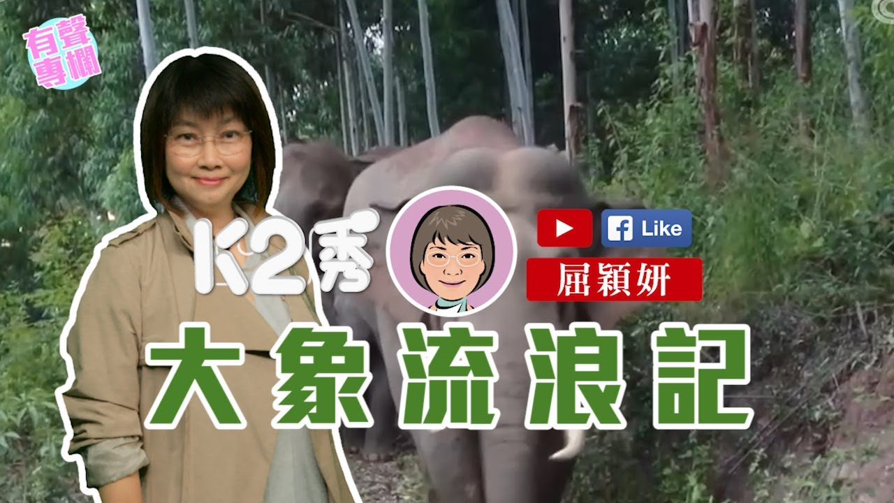 【K2秀】屈穎妍:大象流浪記