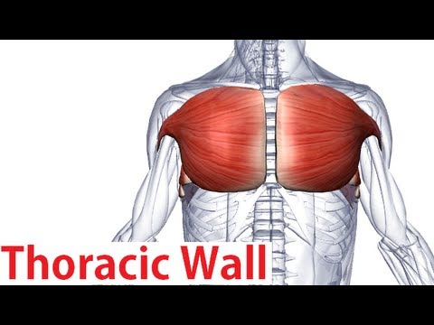 Muscles Of The Thoracic Wall Chest Muscles Anatomy Youtube