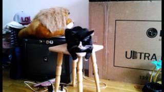 ♡Ленивые коты♥