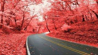 Top 70 Beautiful Colorful Way