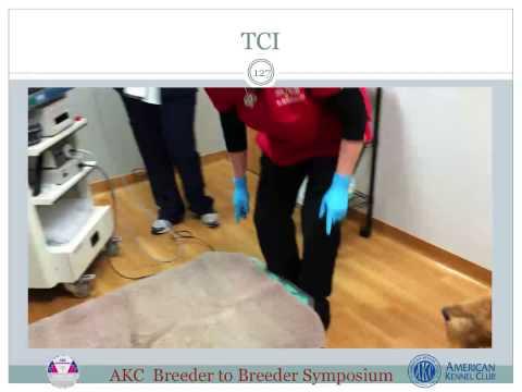 AKC Breeder to Breeder Symposium: Maximizing the Potential of Your Breeding Program