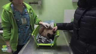 Кошка у ветеринара.