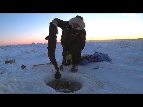 MAKSA: how to make & eat it. Winter fishing for burbot on Lena River Russia in -40. Рыбалка, налим.
