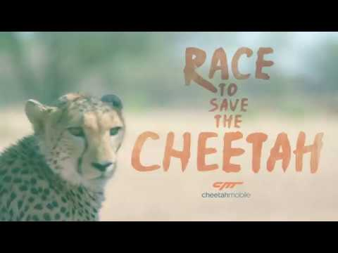 International Cheetah Day - The Explorations Co