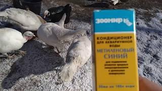 метиленовый синий для сельхоз птицы