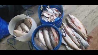 Ночная Рыбалка На Сплавную сеть Добыча Сплавной Сетью Засолка Сухим Посолом