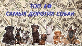 Топ 10 дорогих собак