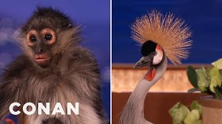 Animal Expert David Mizejewski: Spider Monkey & African Crowned Crane   CONAN on TBS