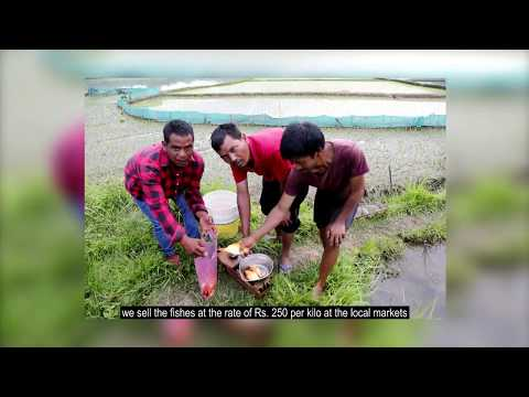 Paddy Cum Fish Culture | English | Meghalaya, MBDA