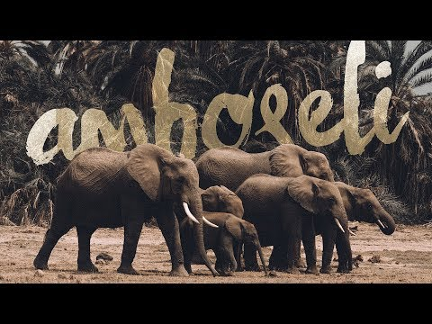 So Many Elephants - Amboseli