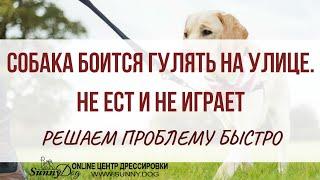 Собака боится гулять на улице, не ест и не играет. Решаем проблему быстро