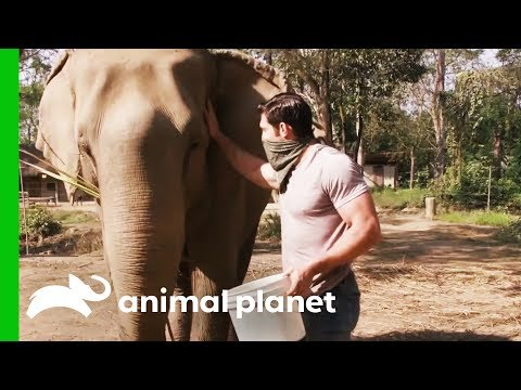 Elephant With Possible Tuberculosis Needs Her Trunk Checked | Evan Goes Wild: Passion and Purpose