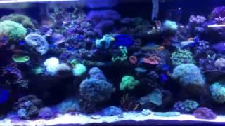 Monster Fish and Reef Tank + Aquarium plants