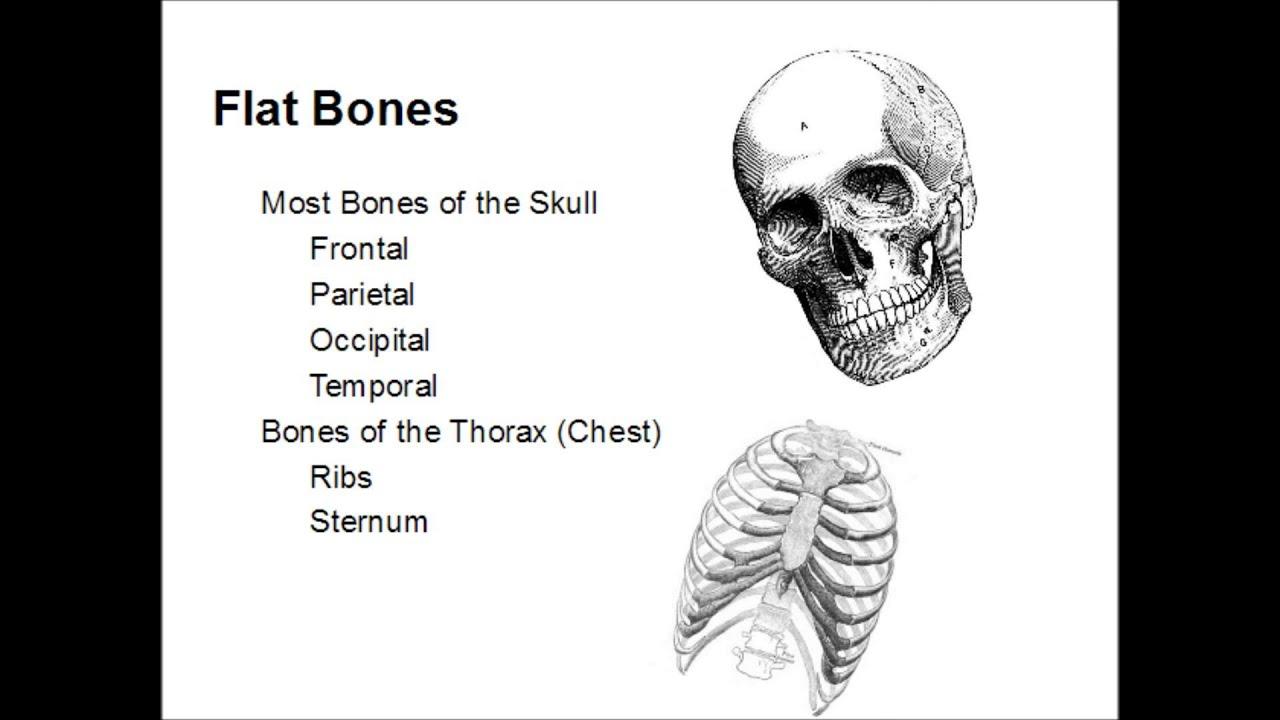 Types of Bones - YouTube