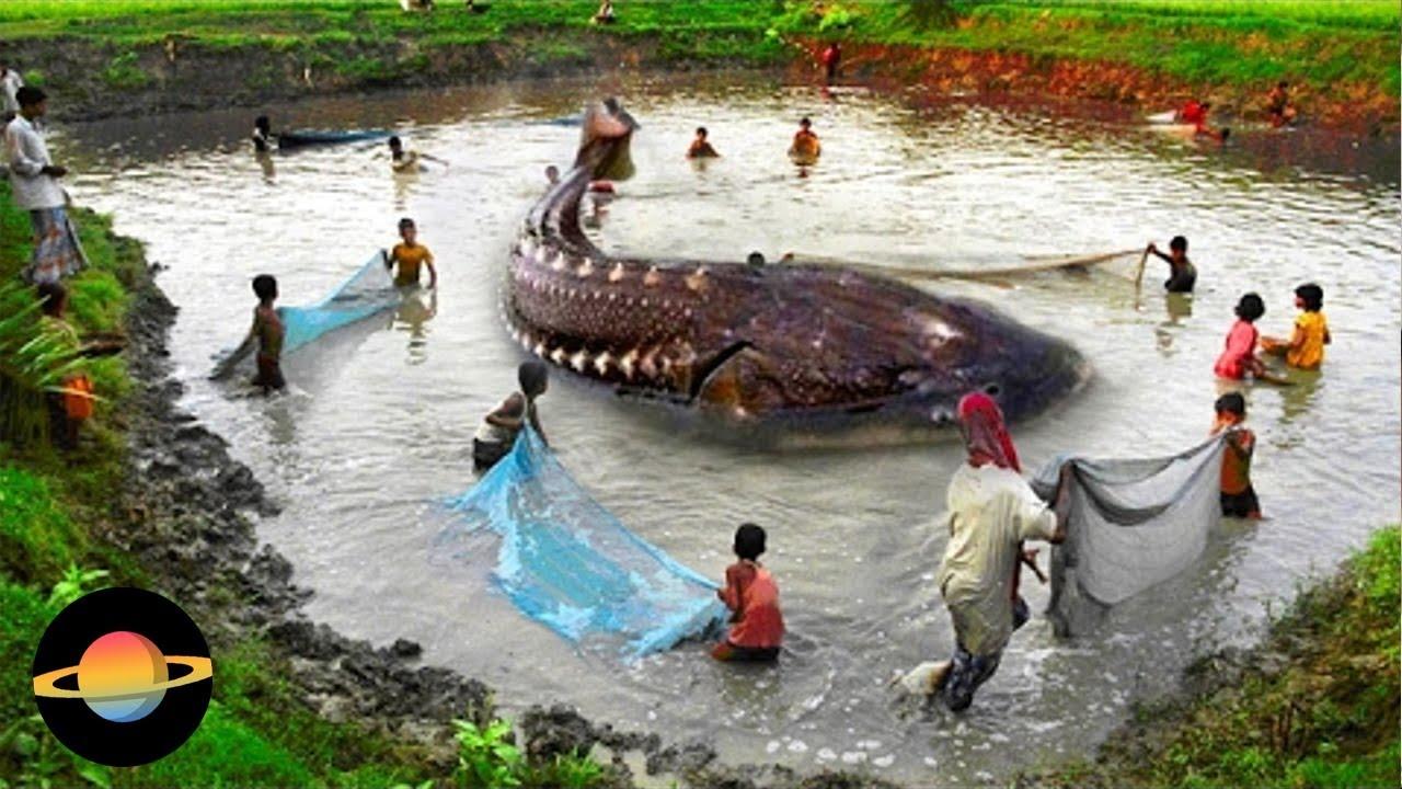 10 zaskakujących faktów o rybach i wędkarstwie