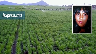 Bambous: le corps de Christiana Chery retrouvé en état de décomposition